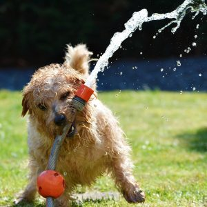 Seattle DogSpot is your go-to, one-stop website for all things dog in the Seattle area.